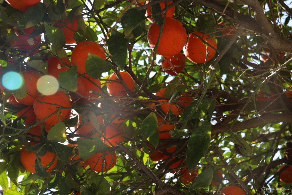 Mandarinen in den Strassen Palermos.
