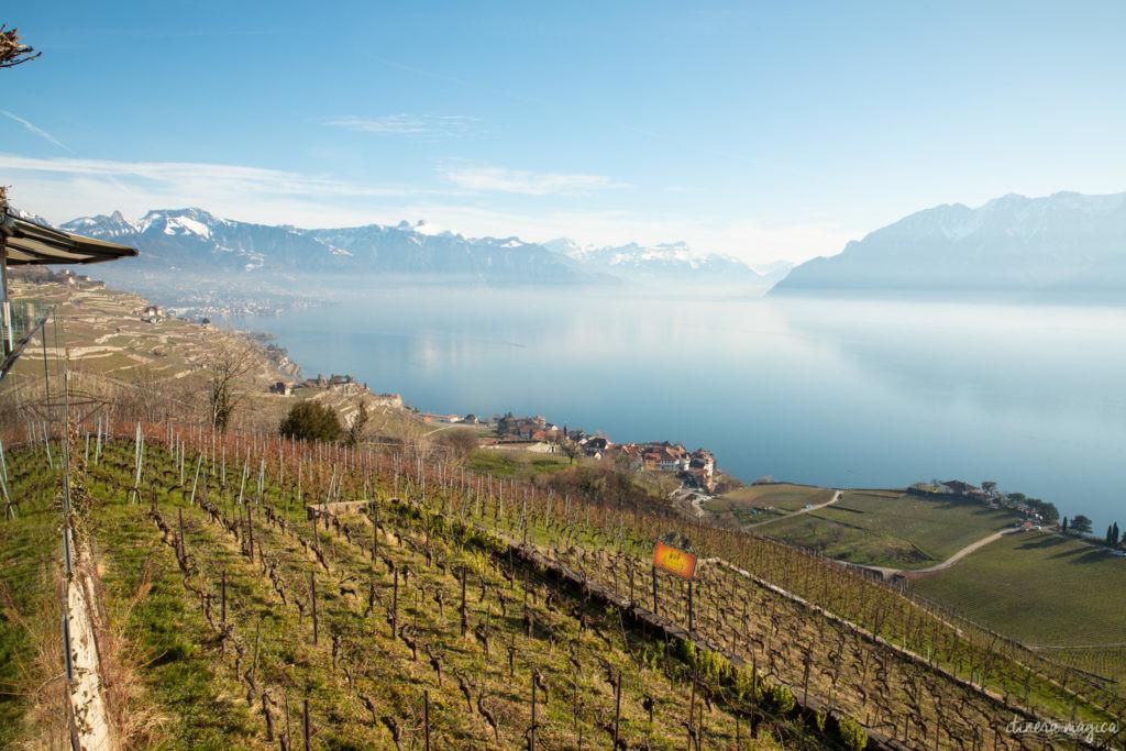 suisse en hiver vignobles de lavaux