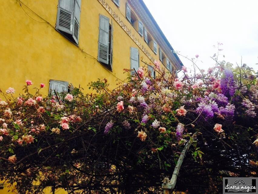 Roses et glycines, délices mélancoliques.