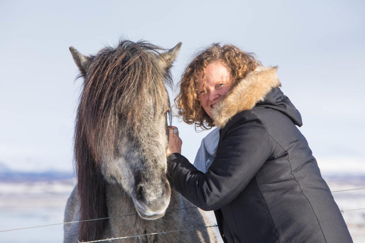 chevaux islandais en hiver snaefellsnes