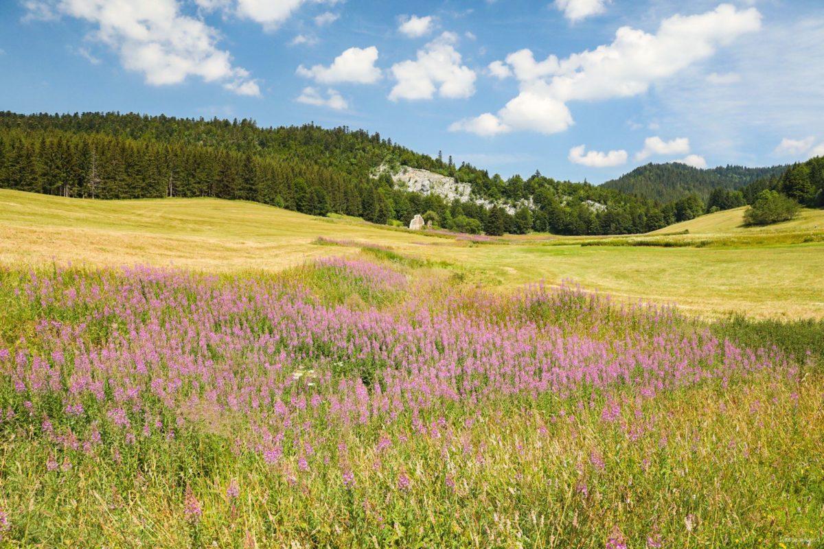 Randonnées dans le Vercors en été et autres incontournables du Vercors