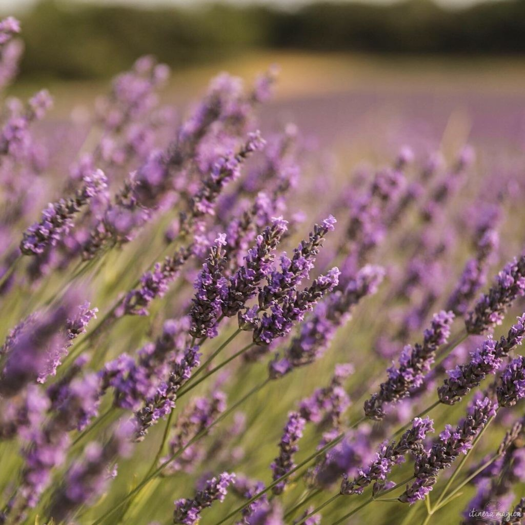 Must see in Provence: the best places to see in Provence, natural wonders of Provence
