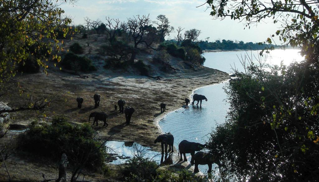 botswana okavango éléphants safari