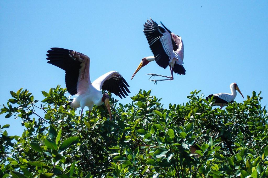 Le ballet coloré des oiseaux dans les arbres.