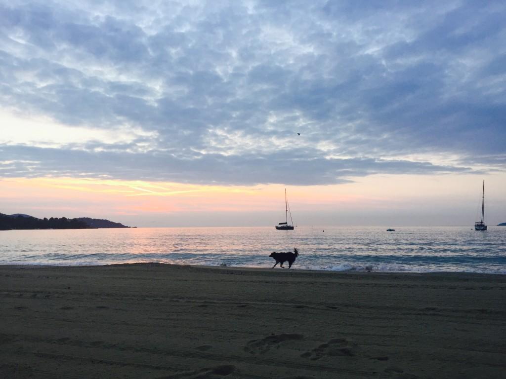 Lever de soleil sur la plage Saint Clair. Un bateau, un chien, un oiseau.