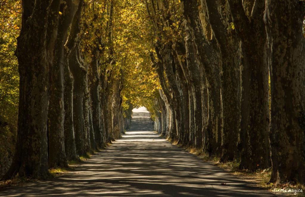 platanes en provence. Week-end romantique à Forcalquier, Lurs, Mane, en Haute-Provence. Que voir dans le pays de Forcalquier ?