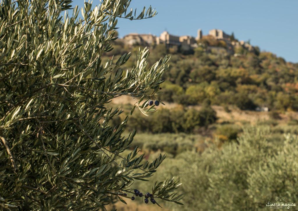 Week-end romantique à Forcalquier, Lurs, Mane, en Haute-Provence. Que voir dans le pays de Forcalquier. Oliviers de Lurs