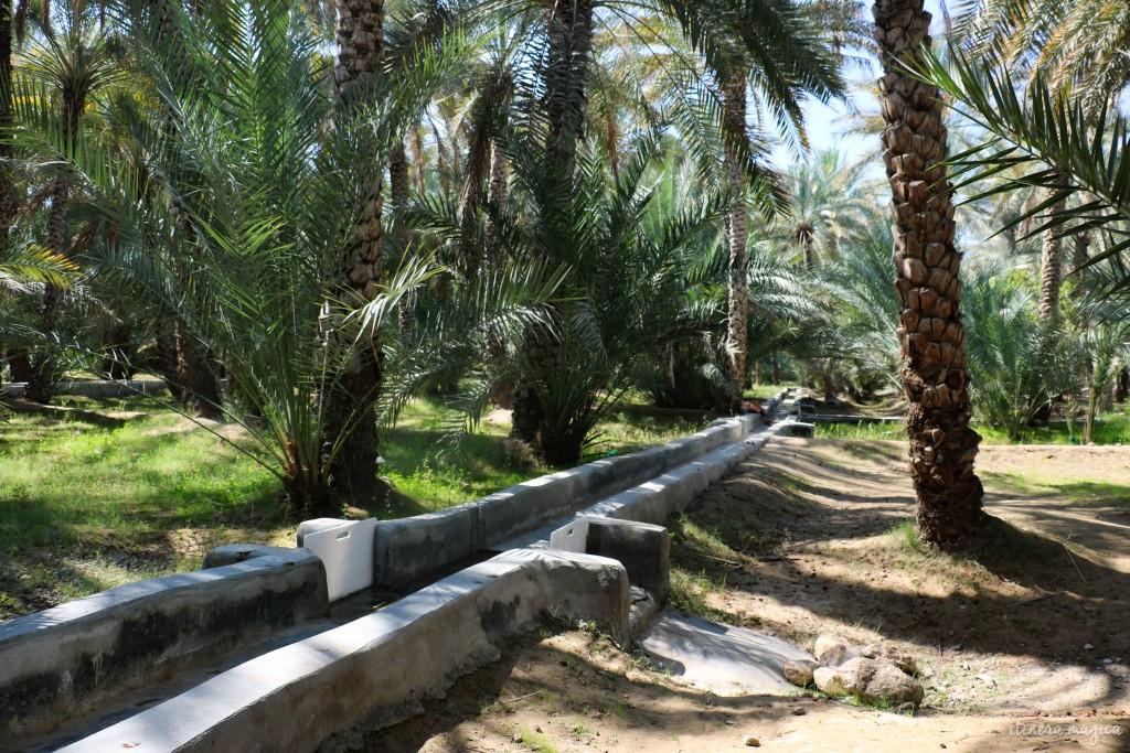 Palmeraie d'Al Ain.