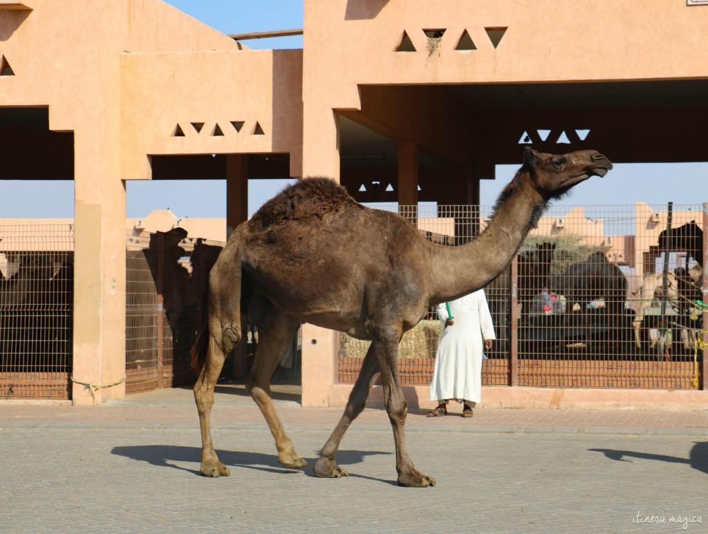Marché aux chameaux d'Al Ain.