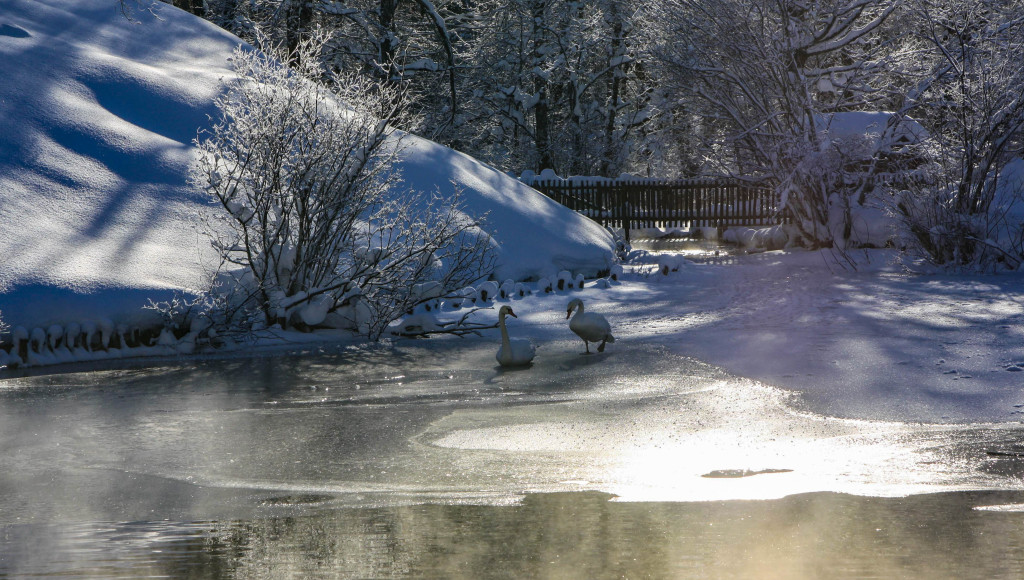 bavière hiver cygnes linderhof louis II