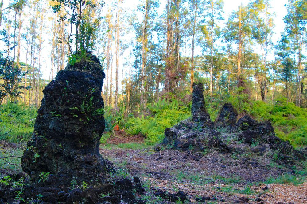 Arbres pétrifiés au Lava Tree State Park.