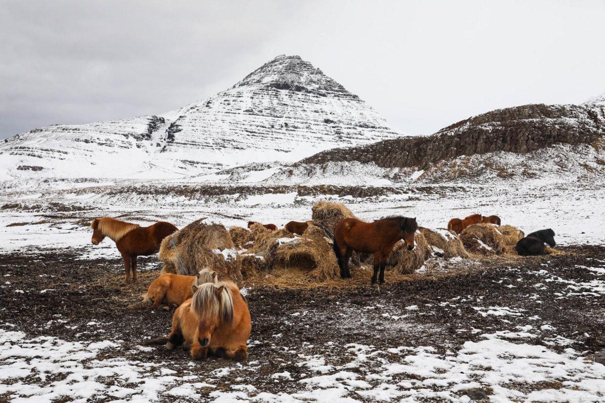 snaefellsnes en hiver islande de l'ouest en hiver