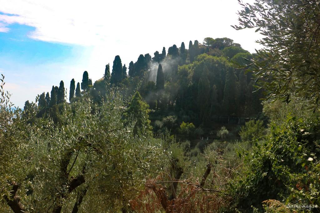 Feux de bois sur les hauteurs de Portofino, cyprès, oliviers et brume antique.