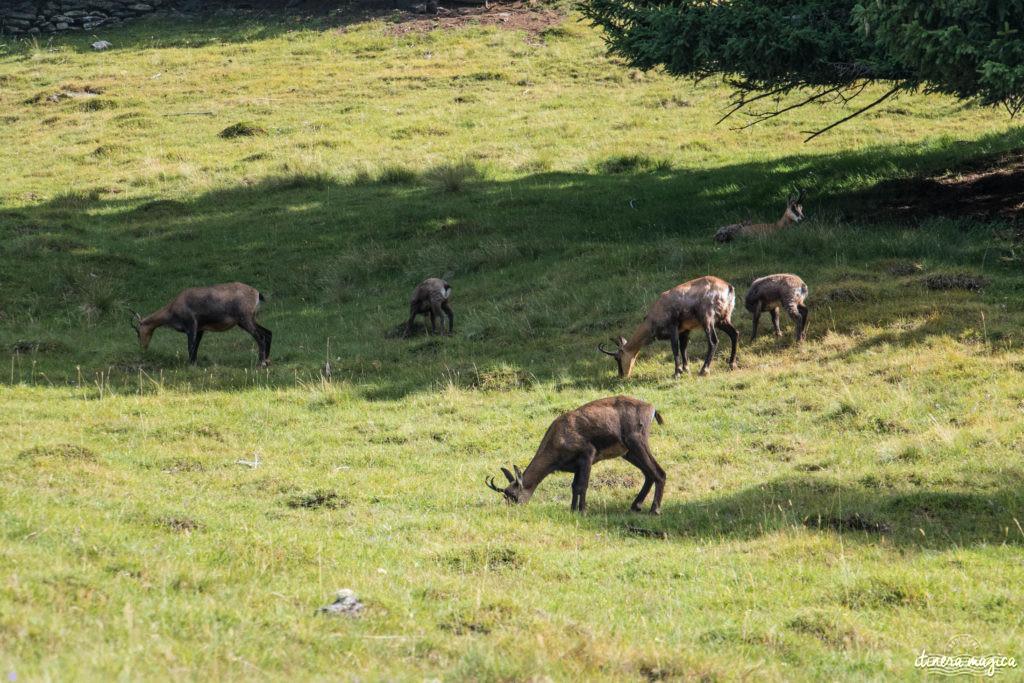 Animaux du Parc Merlet, Chamonix