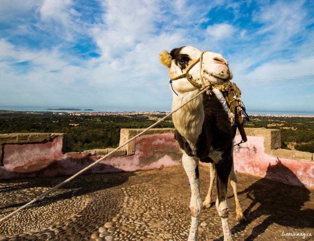 Sur la route de Ouarzazate ou des cascades d'Ouzoud, road trip dans le sud du Maroc. Tizi N'Tichka