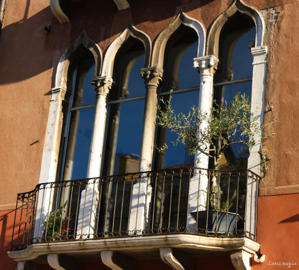 An olive tree on a balcony.