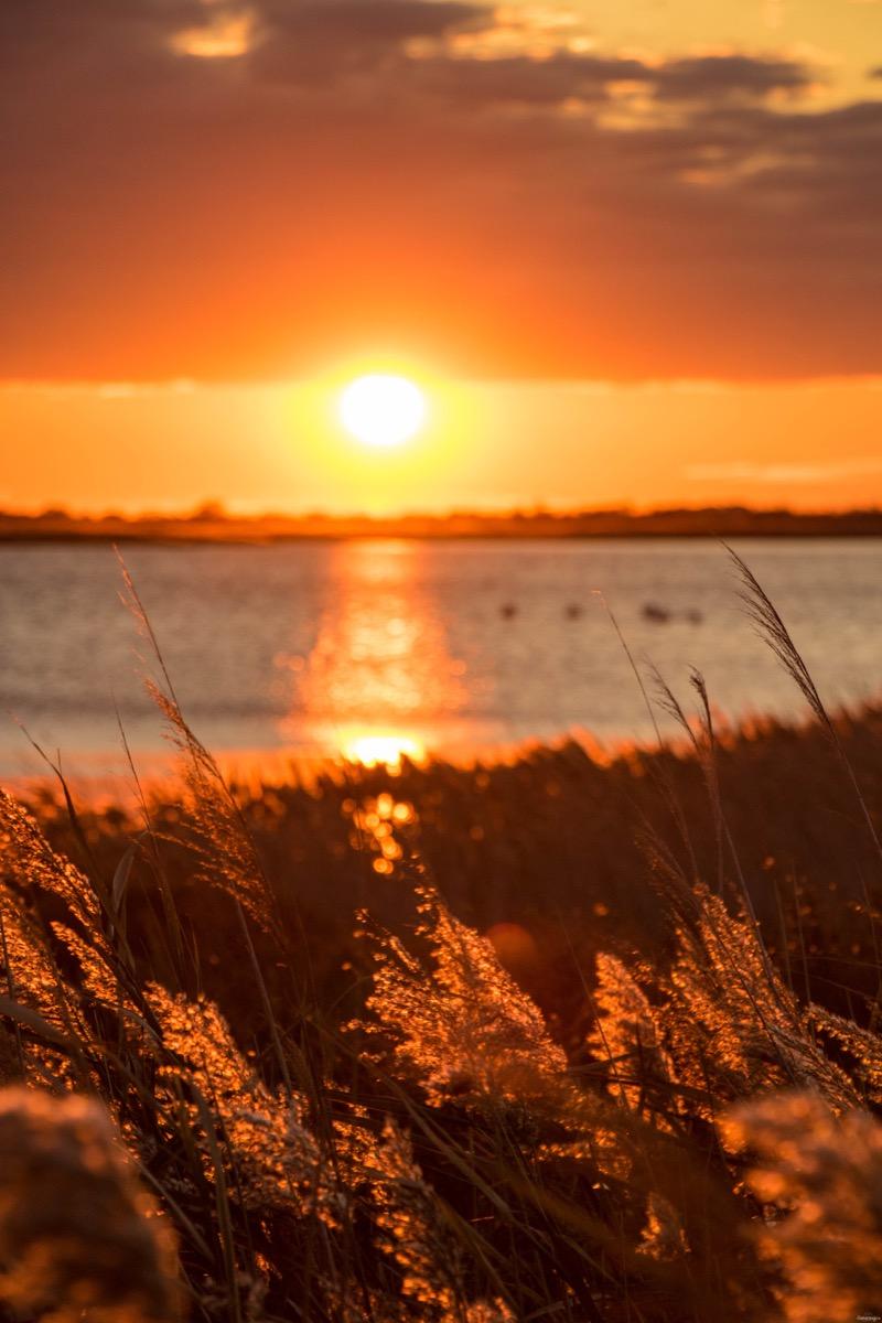 Les plus beaux couchers de soleil de #France, ils sont en #Camargue. Où voir les flamants roses ? Les plus belles plages sauvages ? Je vous dis tout dans ce blog Camargue.