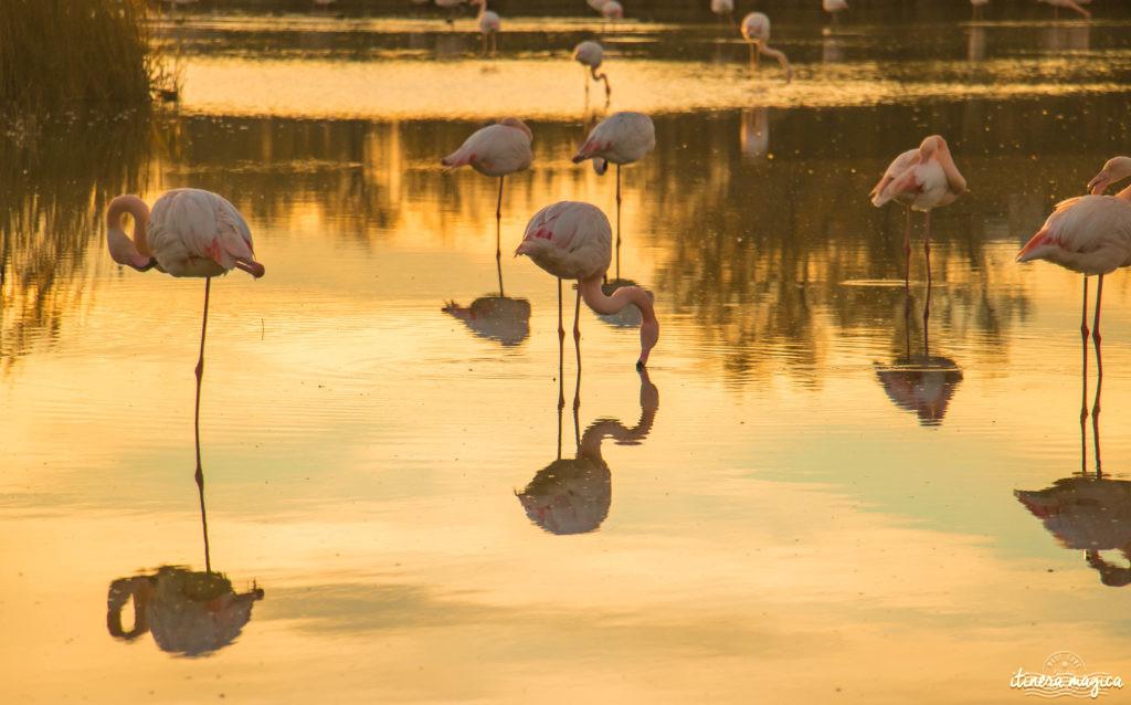 parc ornithologique camargue.