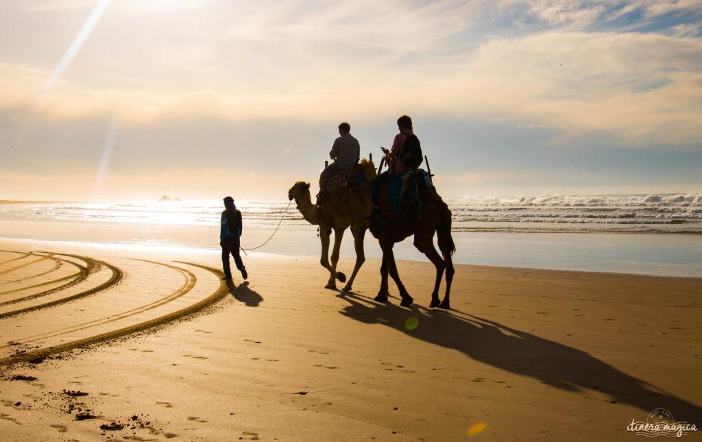 Que voir à Essaouira, que faire ? Promenade à dos de chameau