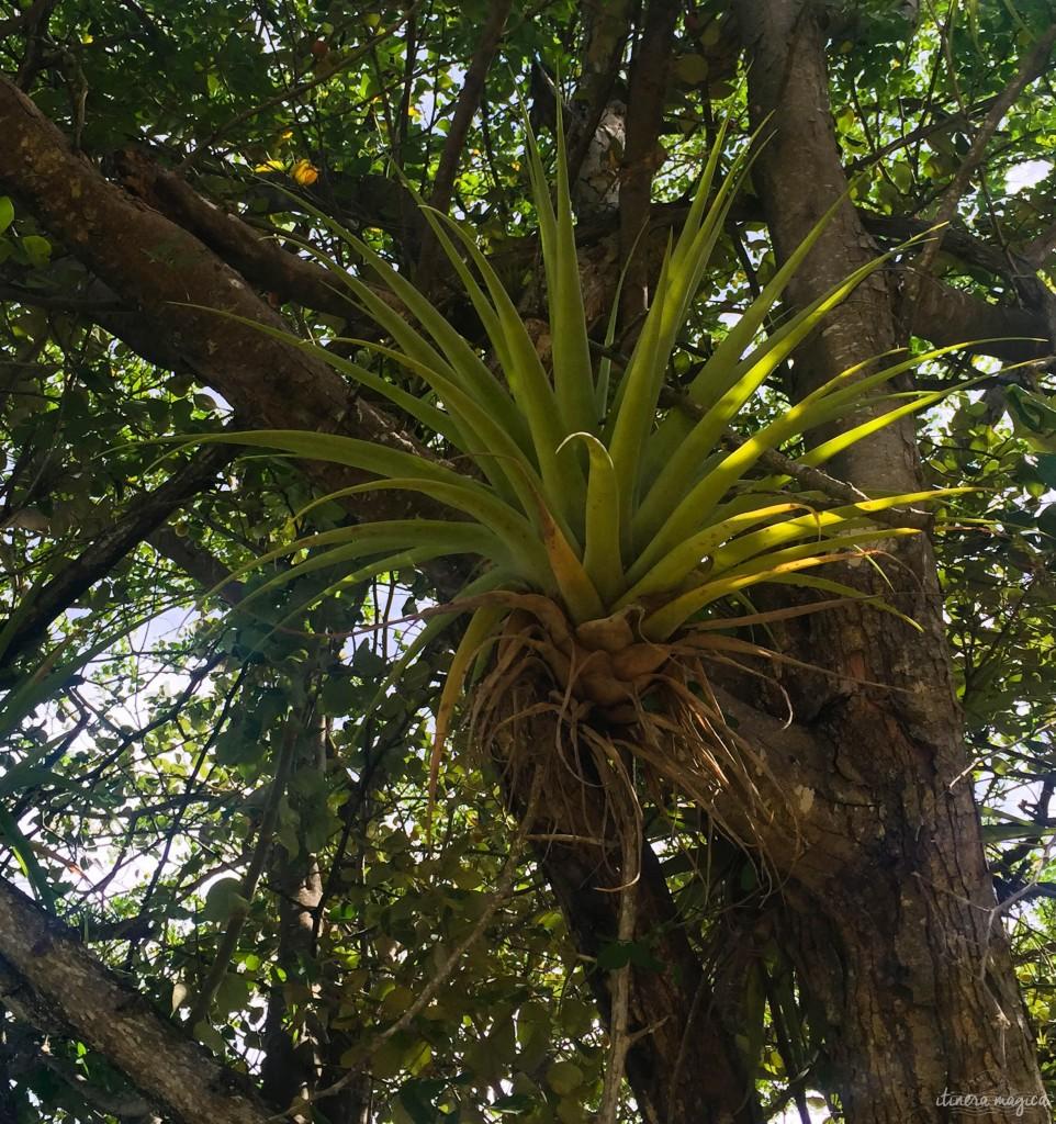 Plantes épiphytes.