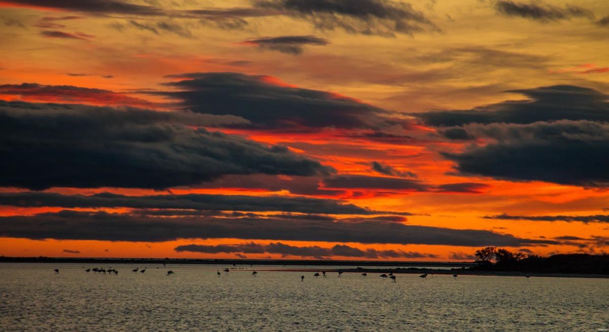 Où voir les flamants roses en Camargue ? Les plus beaux couchers de soleil ? Que voir en Camargue ? Blog photo #Camargue