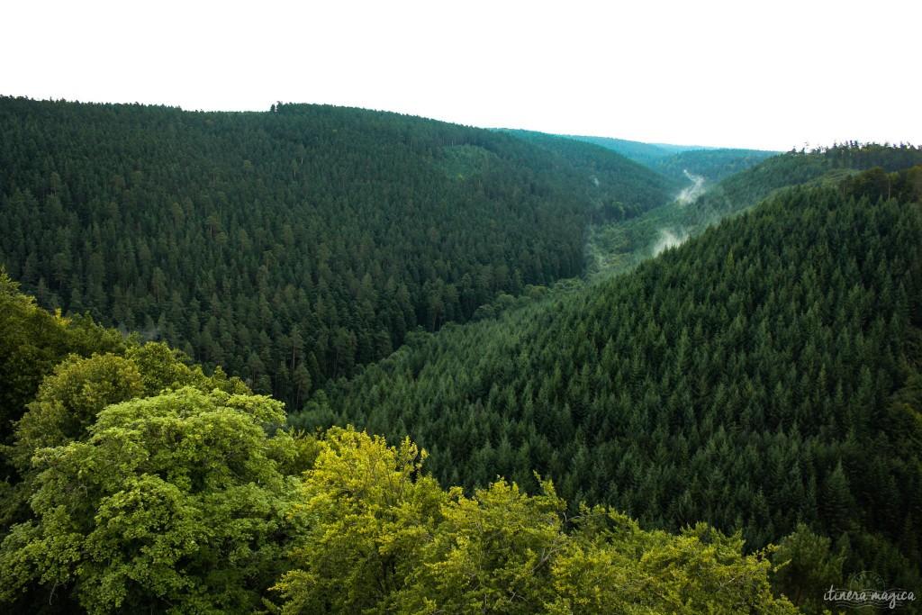 Tiefer elsässischer Wald.