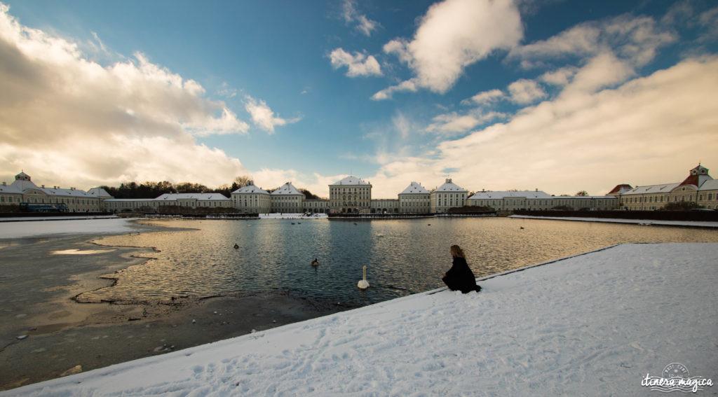 Cygnes de Bavière en hiver