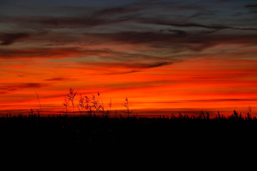 Sonnenuntergang in der Camargue.