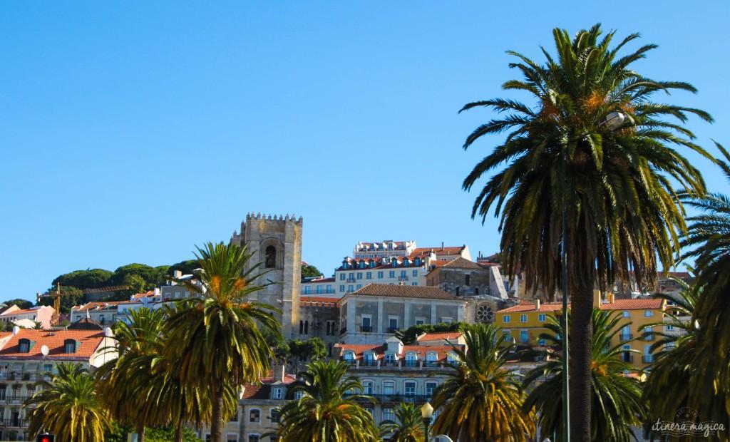 Une des tours de la cathédrale, entre les palmiers.