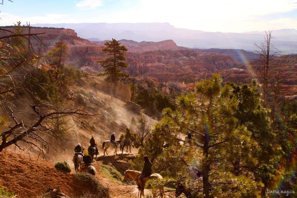 Chevaux à Bryce Canyon.