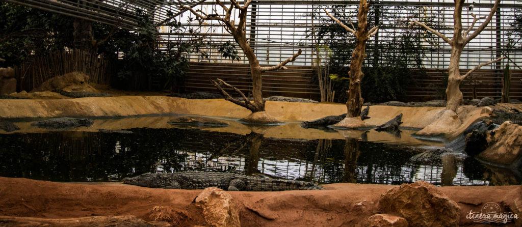Que faire dans la Drôme ? Visiter la Ferme aux crocodiles ! Le paradis des reptiles: crocodiles, pythons, iguanes, tortues géantes, et bien d'autres animaux