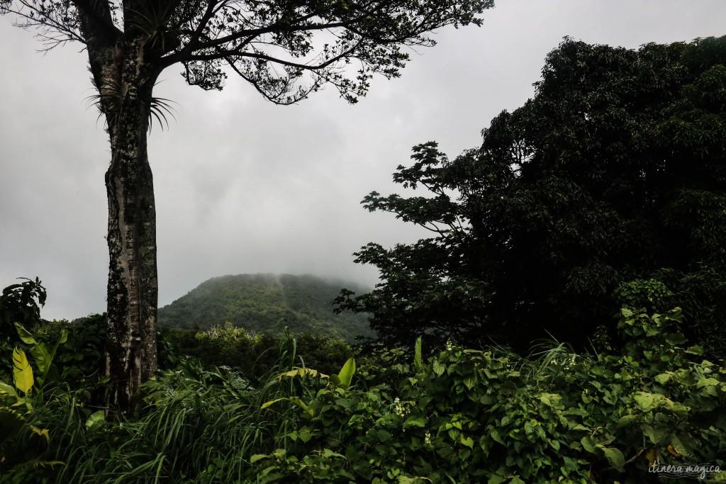 Collines impénétrables de la Basse-Terre, où Delgrès s'était réfugié.