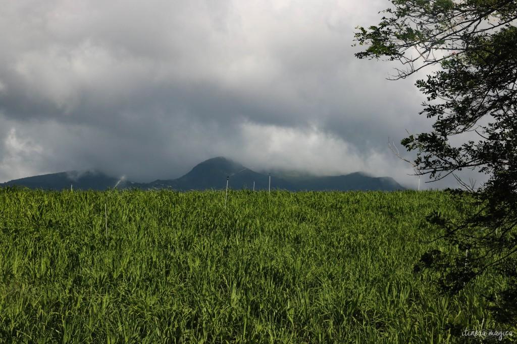 Des champs de canne, et la nébuleuse Souffrière.