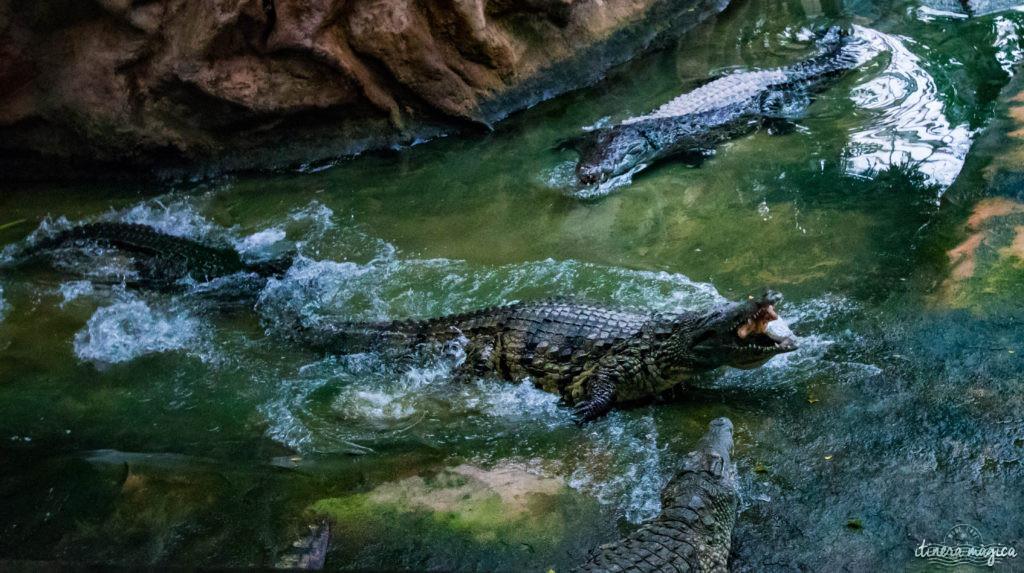 Que faire dans la Drôme ? Visitez la ferme aux crocodiles de Pierrelatte, le paradis des reptiles !