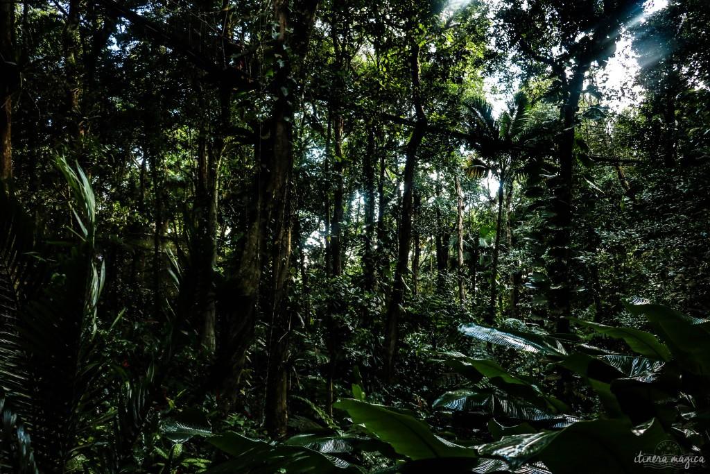 Visions de la jungle, au parc des Mamelles.