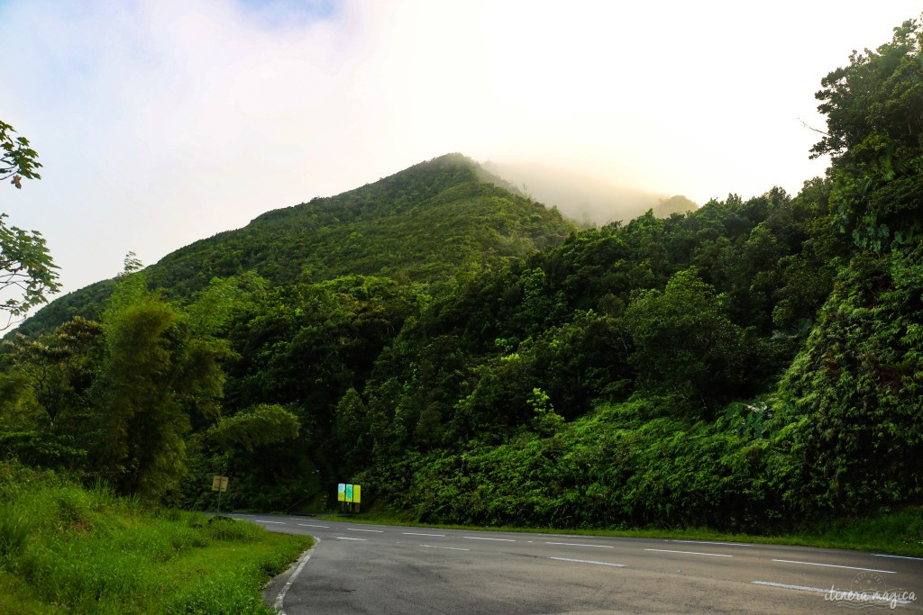"""Route de la traversée, ou le """"Monde perdu"""" au coeur de la Guadeloupe."""