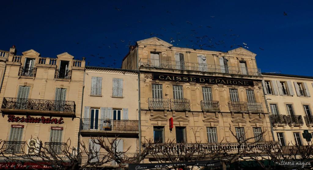 Nuées d'oiseaux sur les façades rétro.