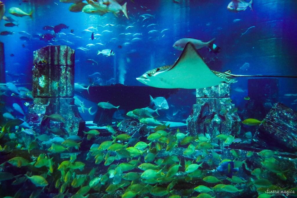 Dubaï aquarium Atlantis voyage