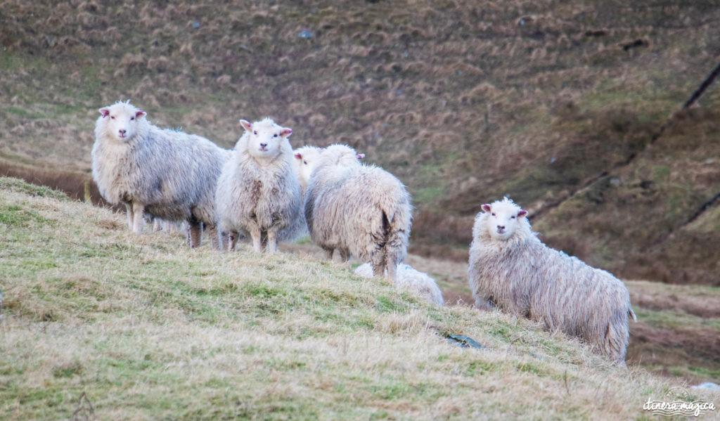Blog Shetland