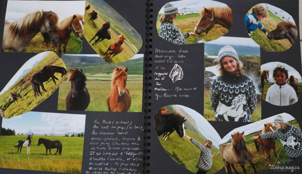 Robes infiniment variées des petits chevaux d'Islande.