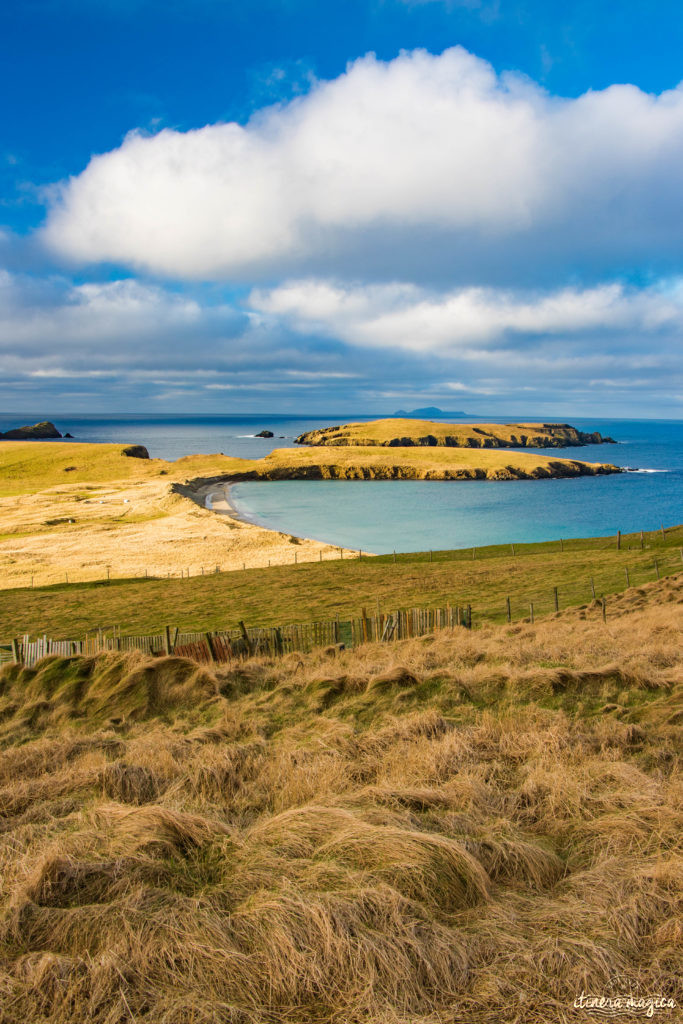 Aller à Shetland, au nord de l'Ecosse : dépaysement total, épopée viking et plages de rêve
