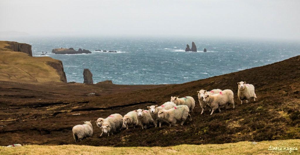 Que voir à Shetland ?