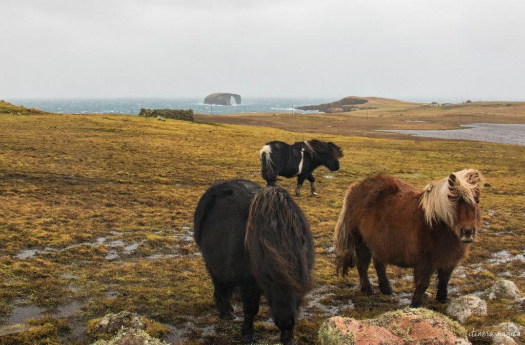 shetland iles du nord