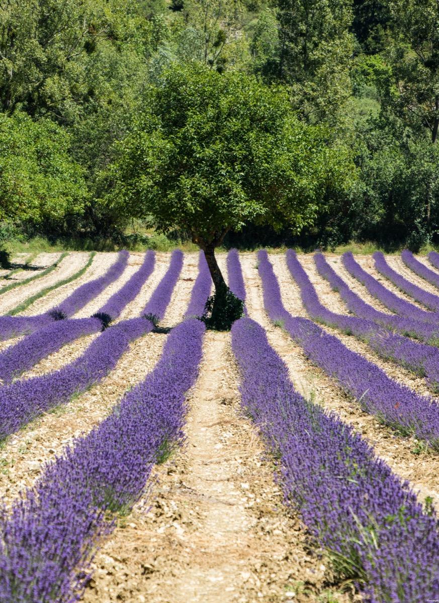 Lavandes Et Rivières Un été En Haute Provence Itinera