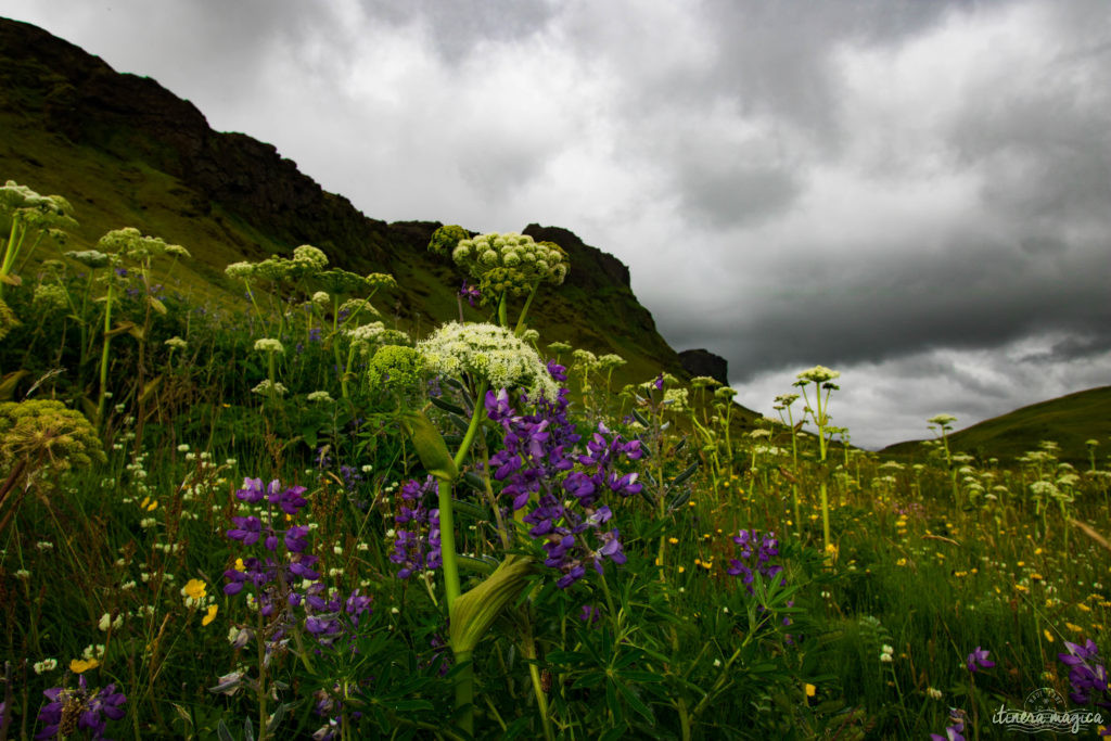 Islande et Açores : les soeurs secrètes. Découvrez les ressemblances entre ces îles de feu, situées sur la même dorsale atlantique.