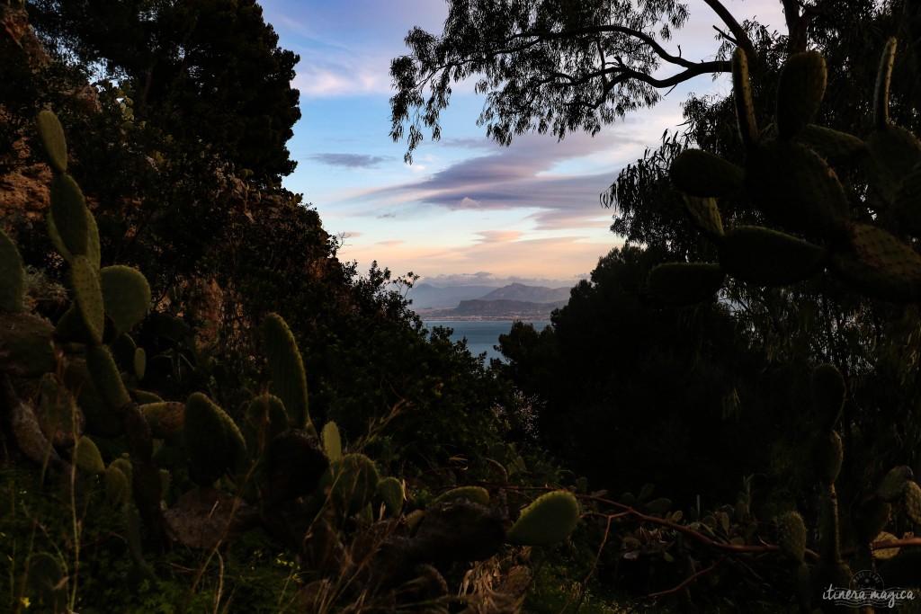 Kaktusfeigen am Monte Pellegrino in der Abenddämmerung - das hohe Vorgebirge um die Bucht Palermos erahnt man in der Ferne.