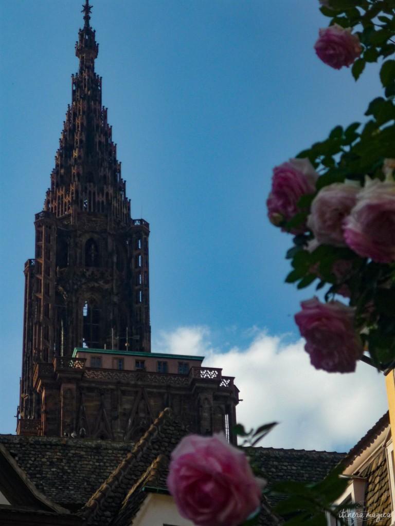 Straßburger Dom mit Rosen.