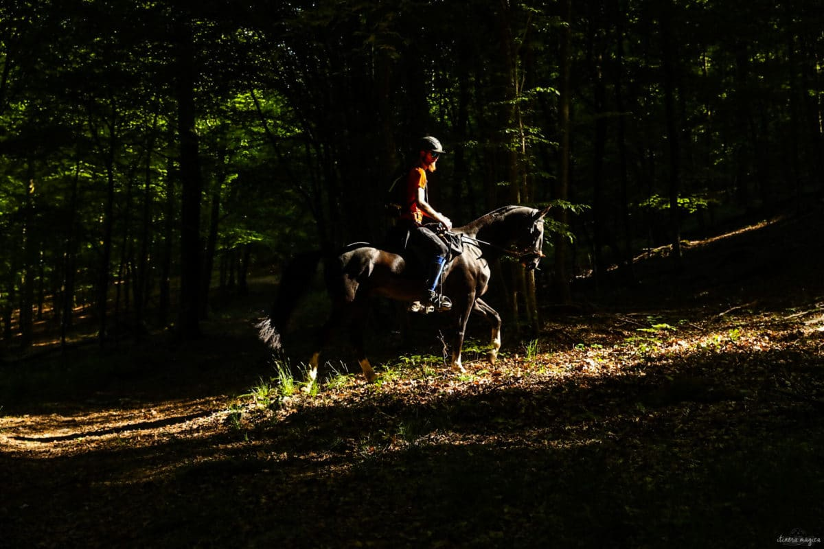 Une randonnée équestre au coeur de la grande forêt de St Hubert ? Partez à cheval en itinérance dans les bois de l'Ardenne.