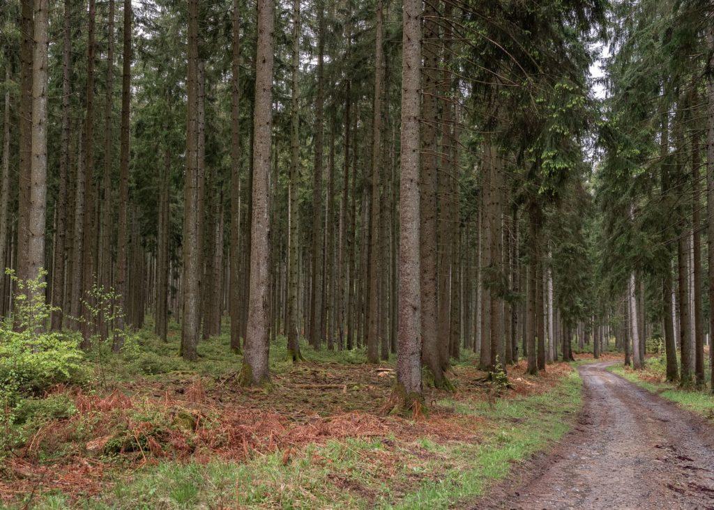 que faire en ardenne belge ? rando vélo activités dans la grande forêt de saint hubert