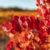 automne dans les baronnies